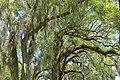 Trees - Bok Tower Gardens - DSC02289.jpg