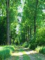 Trees And Shadows - panoramio.jpg