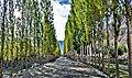 Trees Village Skardu.jpg