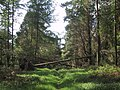 Trees block a woodland ride on Bovey Down - geograph.org.uk - 1285581.jpg