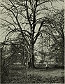 Trees in nature, myth and art; (1907) (14762971932).jpg