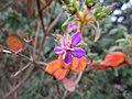 Tropical Purple Flower.jpg