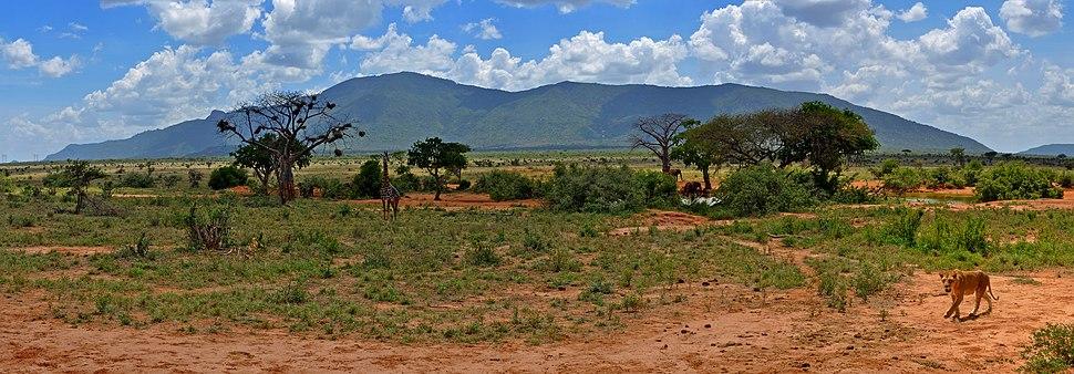 Tsavo east panorama