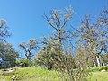 Tuolumne County, CA, USA - panoramio (24).jpg