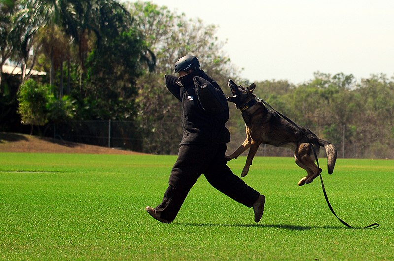 Protective Suit Dog Training