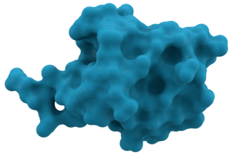 Ubiquitin - Surface representation of Ubiquitin.