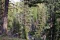 Umatilla NF Desolation Creek001 (23825740752).jpg