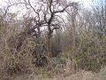 Verhuny, Poltavs'ka oblast, Ukraine, 37873 - panoramio (98).jpg