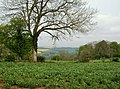 View west from the Gloucestershire Way - geograph.org.uk - 447280.jpg
