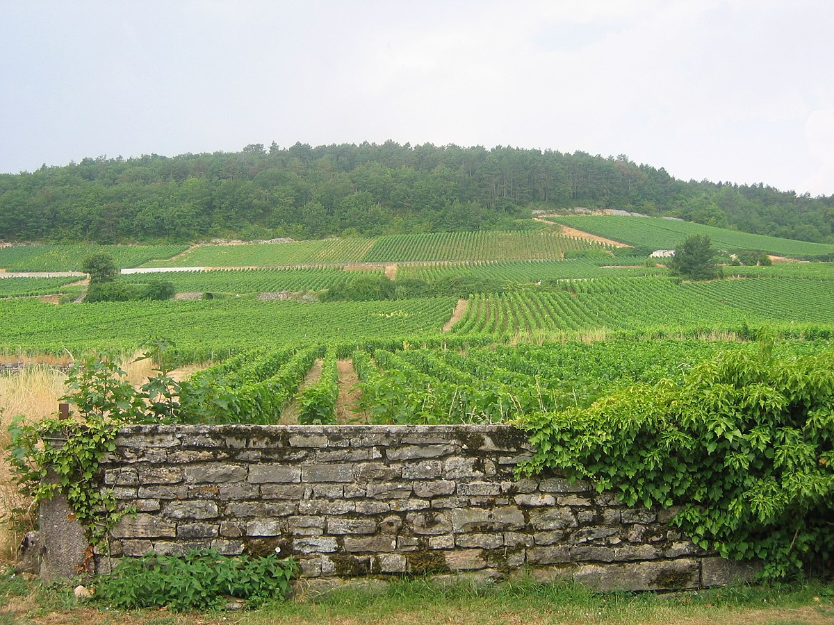 Gevrey-chambertinのブドウ畑