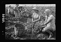 Vintage activities at Richon-le-Zion, Aug. 1939. Group of grape pickers (close up) LOC matpc.19758.jpg