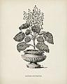 Vintage illustrations by Benjamin Fawcett for Shirley Hibberd digitally enhanced by rawpixel 20.jpg
