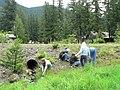 Volunteers weeding near Trail of Shadows. slide (670721eee94140be8bb9485d82f85914).JPG