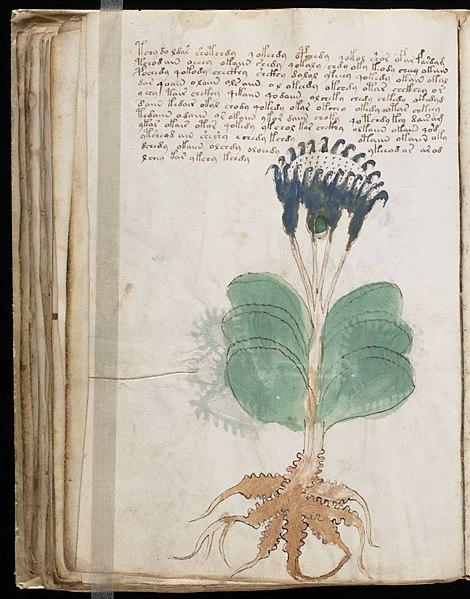 Fichier:Voynich Manuscript (100).jpg