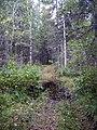 Vozhegodskiy r-n, Vologodskaya oblast' Russia - panoramio - Сергей Зубов (53).jpg