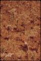WHITE TAIL DEER IN BIG CYPRESS SWAMP - NARA - 544623.tif