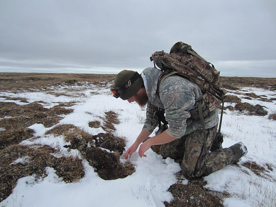 WS trapper setting fox trap
