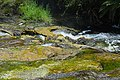 Waimangu Stream (Hot Water Creek) cascading through silica formations.jpg