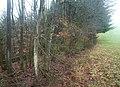 Waldrand nahe Achtfeld (Woodland edge near Achtfeld) - geo.hlipp.de - 23427.jpg