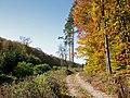 Waldweg06.jpg