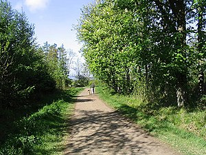 English: Walking the dog in Swarland Wood