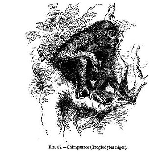 Alfred Russel Wallace - An illustration from the chapter on the application of natural selection to humans in Wallace's 1889 book Darwinism shows a chimpanzee.