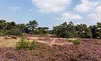 Wandeltocht door bloeiende heidevelden en zandverstuivingen van de Schaopedobbe (Schapenpoel) 07.jpg