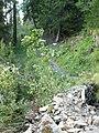 Wanderweg von Obermutten nach Samest - panoramio.jpg