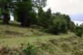 Wartenberg Landenhausen Trockenrasen Auf dem Buchenwald Juniperus Ericales 555520689.png