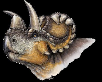 Wendiceratops restoration.PNG
