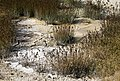 West Thumb mud pots YNP1.jpg
