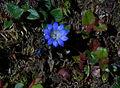 Whf blue 15.jpg