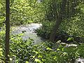 Whippany River.jpg