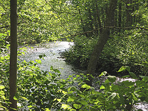 Whippany River - The Whippany River, as seen from the grounds of the Frelinghuysen Arboretum.