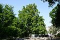 Wiener Naturdenkmal 566 - Platane (Innere Stadt) g.JPG