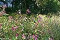 Wild flowers - geograph.org.uk - 527317.jpg
