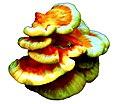 Wild mushrooms. Wood.jpg