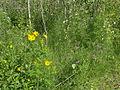 Wildflowers TGPP.JPG
