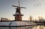 Windmill Zeldenrust in Dokkum.jpg