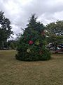 Winter Park Christmas Tree Number 2 (30737936544).jpg