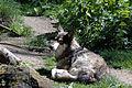 Wolf in the sun.jpg