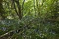 Woodland3 (5653235551).jpg