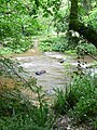 Woodland River - geograph.org.uk - 484578.jpg