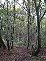 Woodland at Treskerby - geograph.org.uk - 957540.jpg
