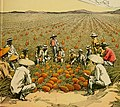 Workers in Pineapple plantation, 1914 book illustration.jpg