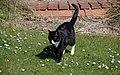 Wraxall 2012 MMB 09 Smudge.jpg