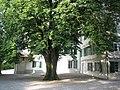 Wurmsbach Linde.jpg