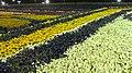 Yanbu flower festival.jpg