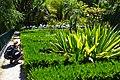 Yann `Papou Arthus-Bertrand au jardin botanique (9305435028).jpg