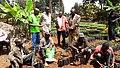 Young seedlings.jpg